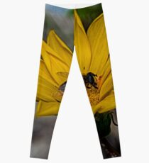 Yellow flower and bee - springtime Leggings