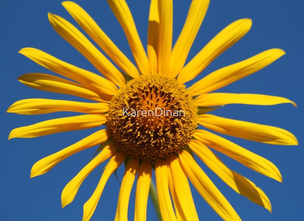Sunny Sunflower LBNY  by KarenDinan