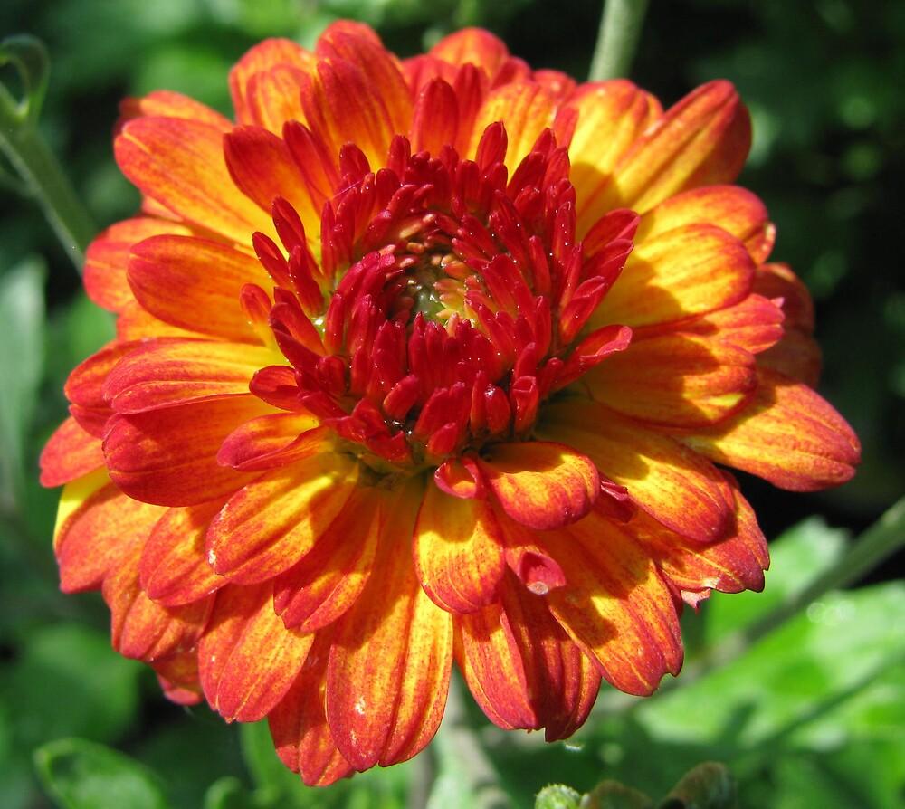 Orange Beauty by Caroline Anderson