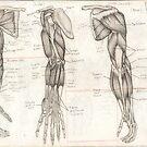 Human Anatomy 4 by Tara Hale