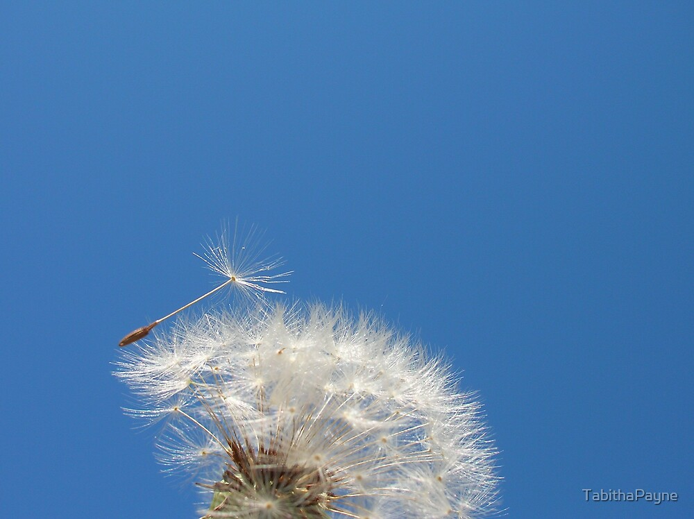 Fly Away by TabithaPayne