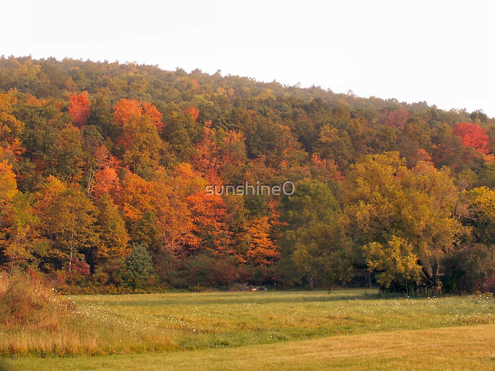 Fall colors by sunshine0