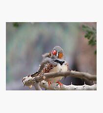 Zebra Finch Photographic Print