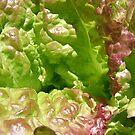 Lettuce Ridges by Diane Petker