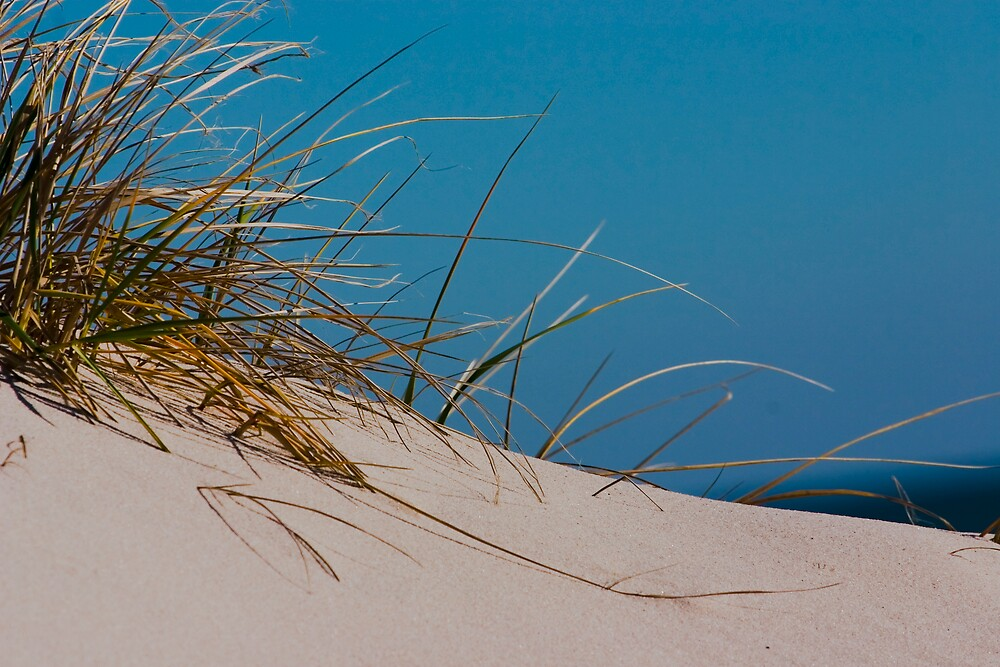 Dune Grass by Dorothy DuMond Cohen