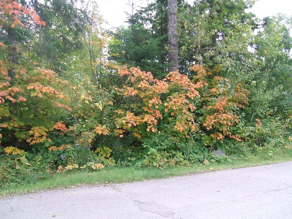 Fall trees by Clowpermou