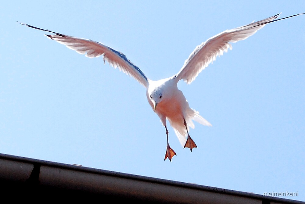 Landing... by mejmankani