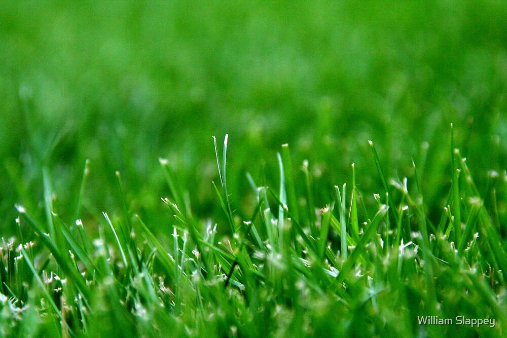 Grass Blades by William Slappey