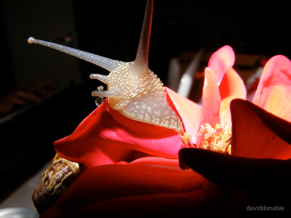 snail for sale by daviddonabie