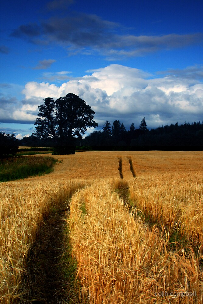 Through the fields to the croft... by colin campbell