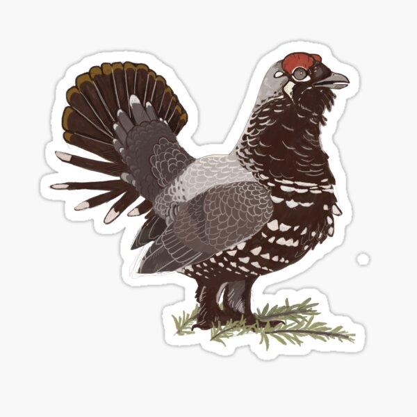 Spruce Grouse Sticker