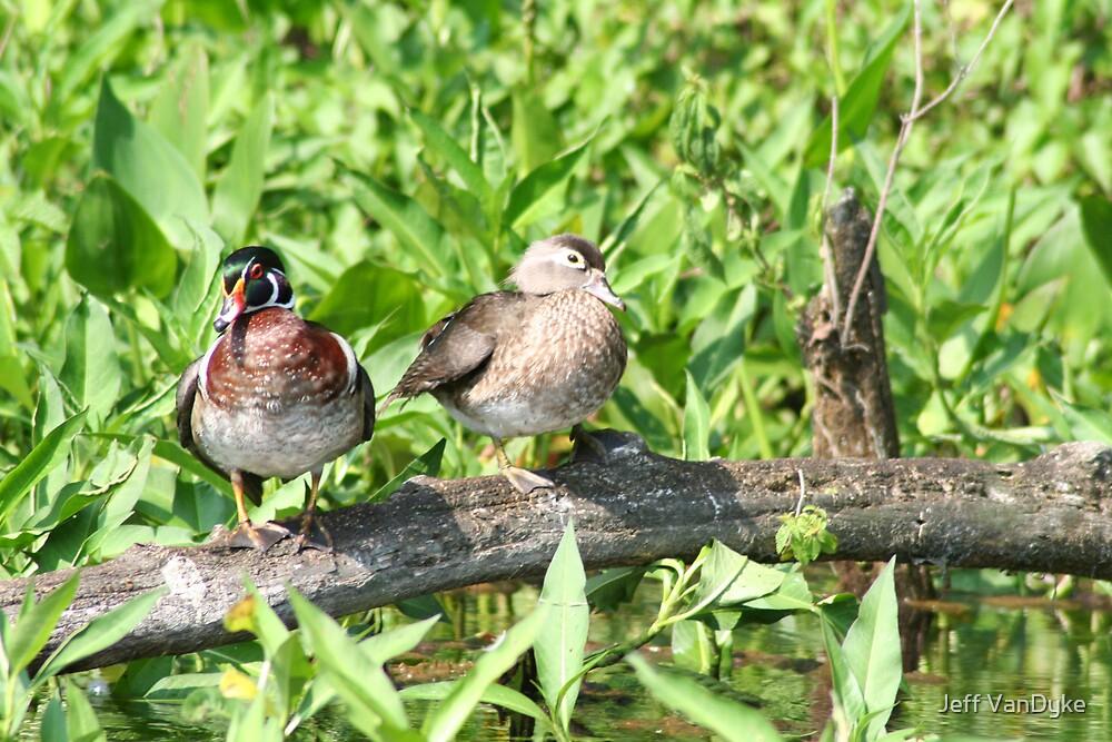Wood Ducks by Jeff VanDyke