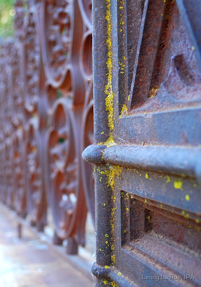 lichen on ironwork by Lenny La Rue, IPA