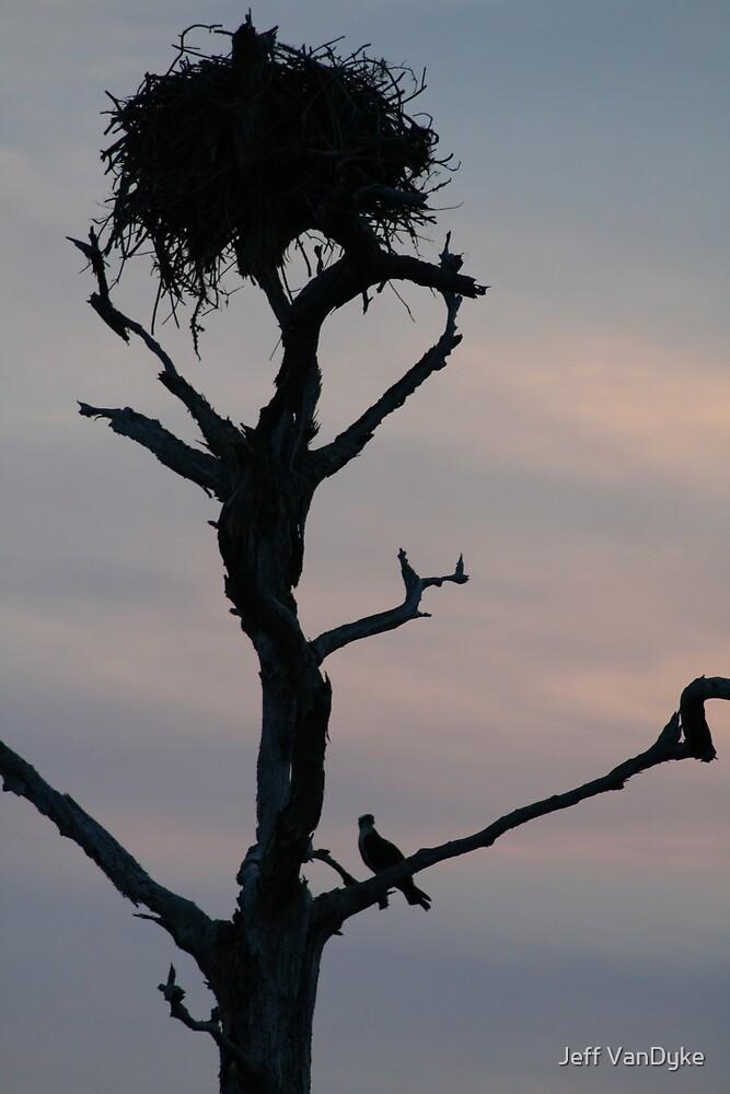 Osprey Silhouette by Jeff VanDyke