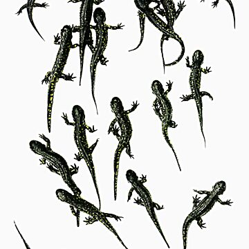 Spotted Salamanders by UffdaGreg