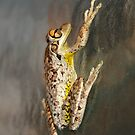 Mr Frog by Virginia N. Fred
