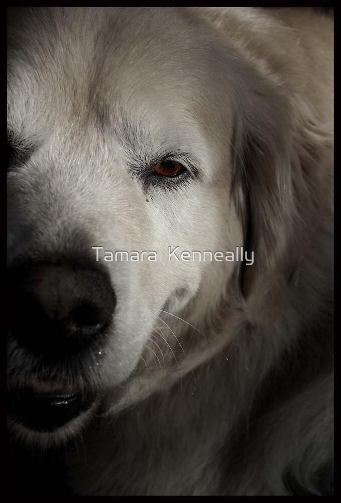 Golden Retriever Eye by Tamara  Kenneally