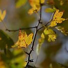 Autumn Stickers by Nature Flicks
