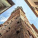 Torre Guinigi Lucca by DavidWHughes