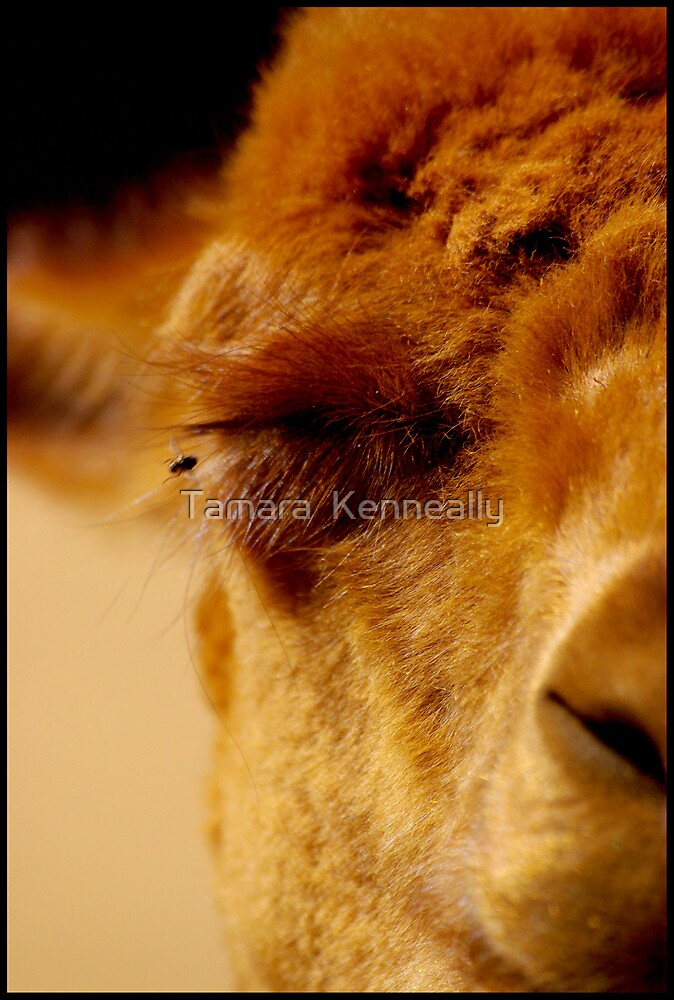 Fly by Tamara  Kenneally