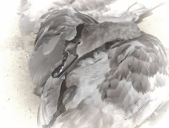 Swan Treatment............ by lynn carter