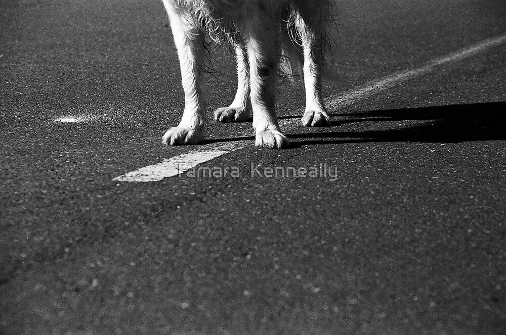 Road Sense by Tamara  Kenneally