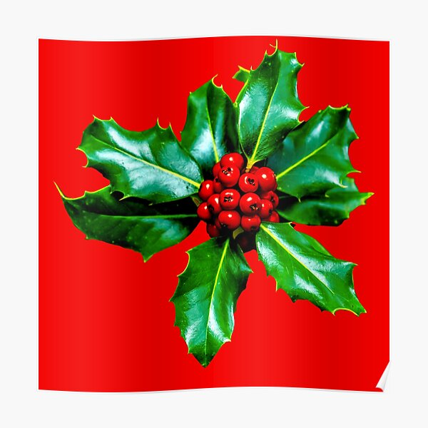 Christmas Holly Berries Poster