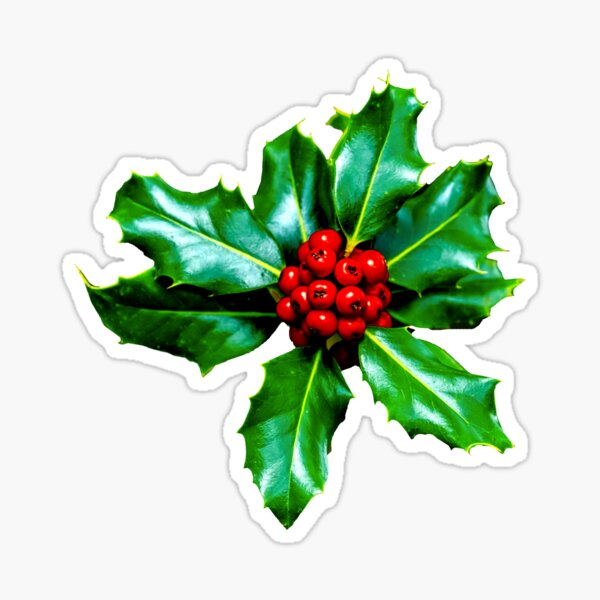 Christmas Holly Berries Sticker