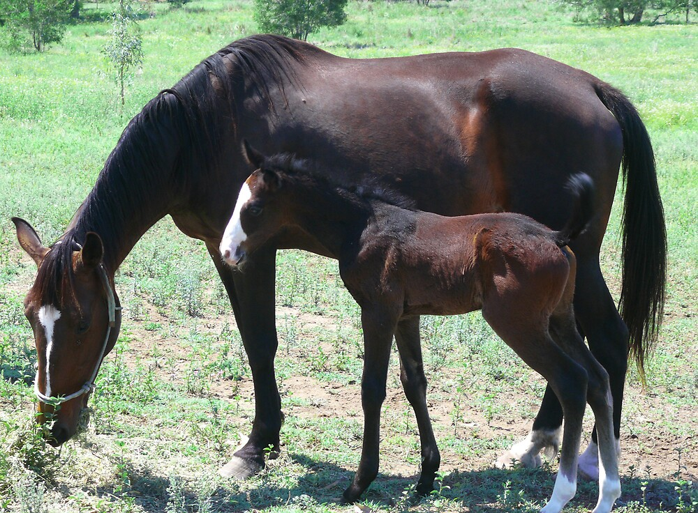 Mum and foal by Tim Everding