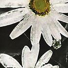 weiße Blumen von greenaomi