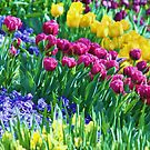 tulips in DC by ANNABEL   S. ALENTON