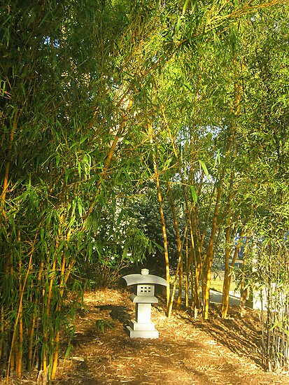 Under The Bamboo by Melissa Park