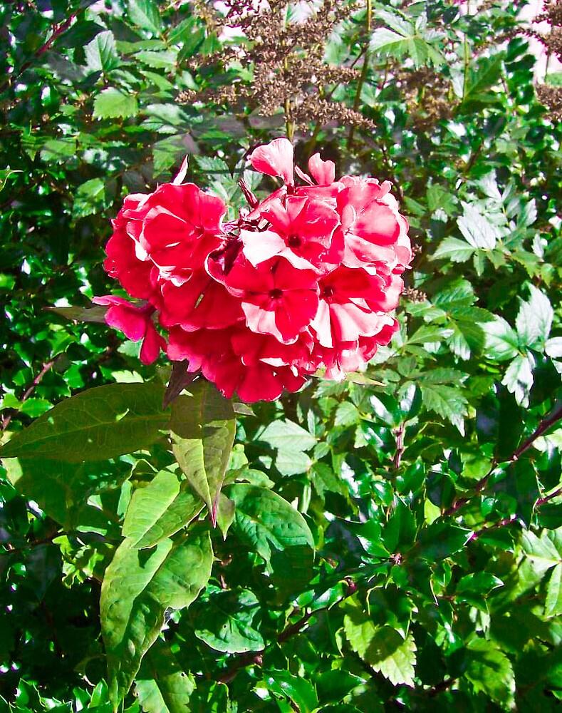 In the Garden..... by Jamie  Mallard