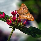 Butterfly with a Glow about it. by TJ Baccari Photography