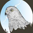 redtail by erisreg