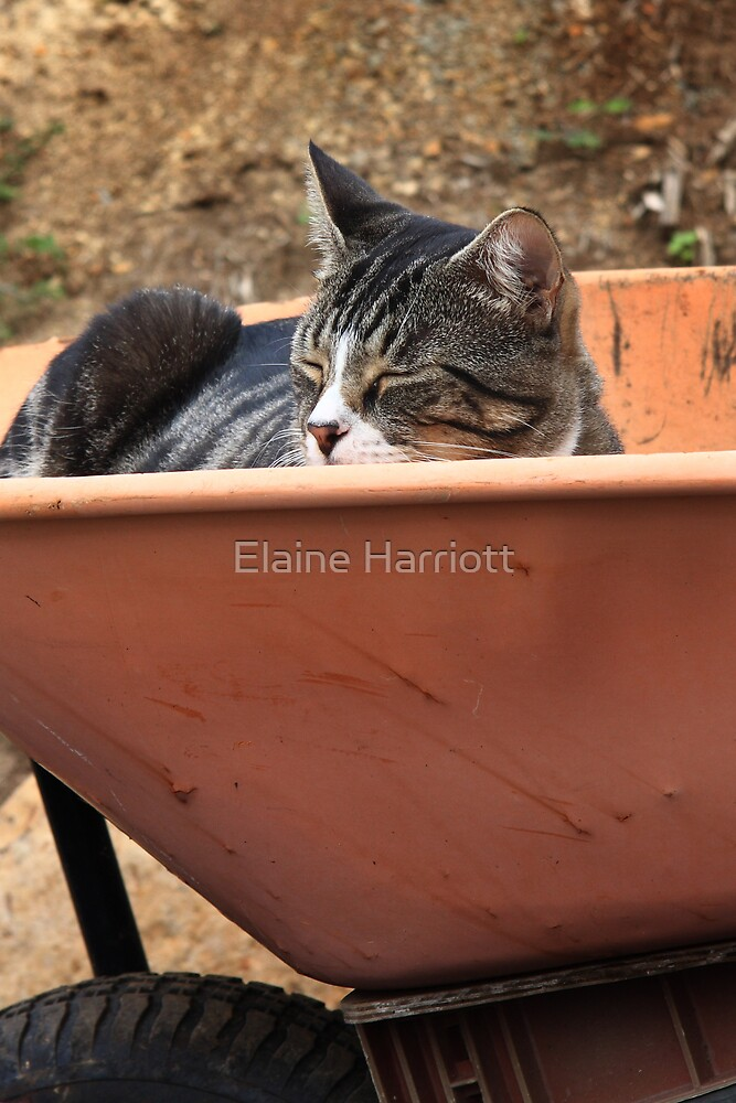 After A Hard Day's Work by Elaine Harriott