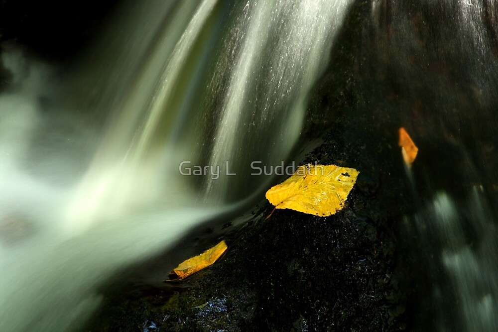 Still Hanging On by Gary L   Suddath