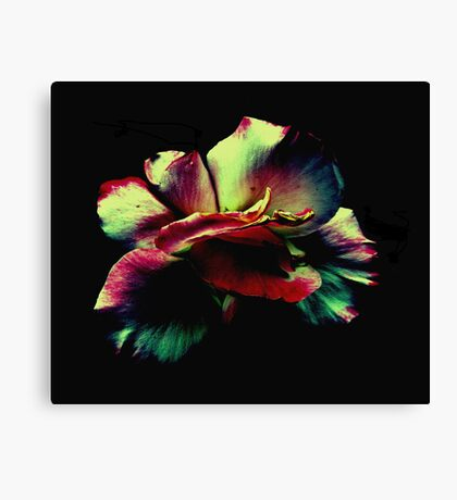 Somehow...   Canvas Print