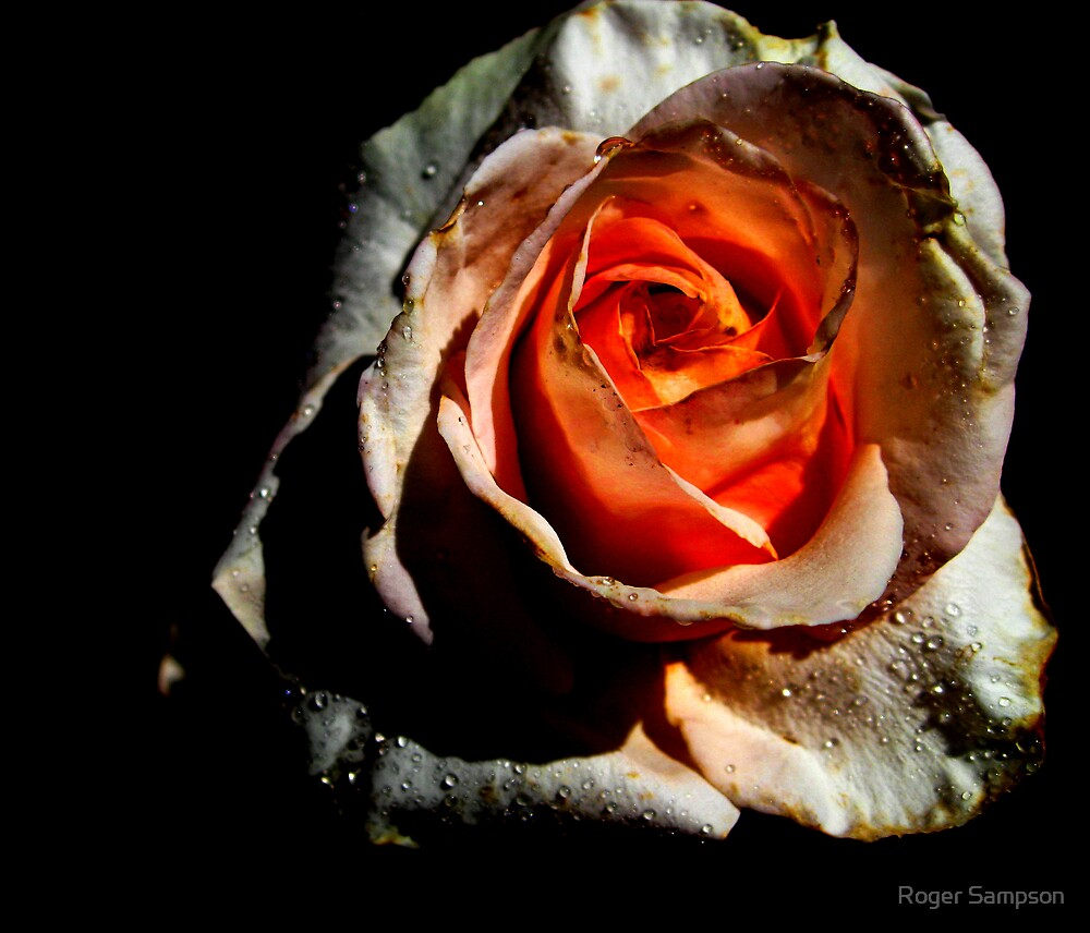 A Heart of Passion by Roger Sampson