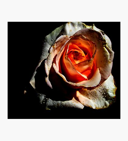 A Heart of Passion Photographic Print