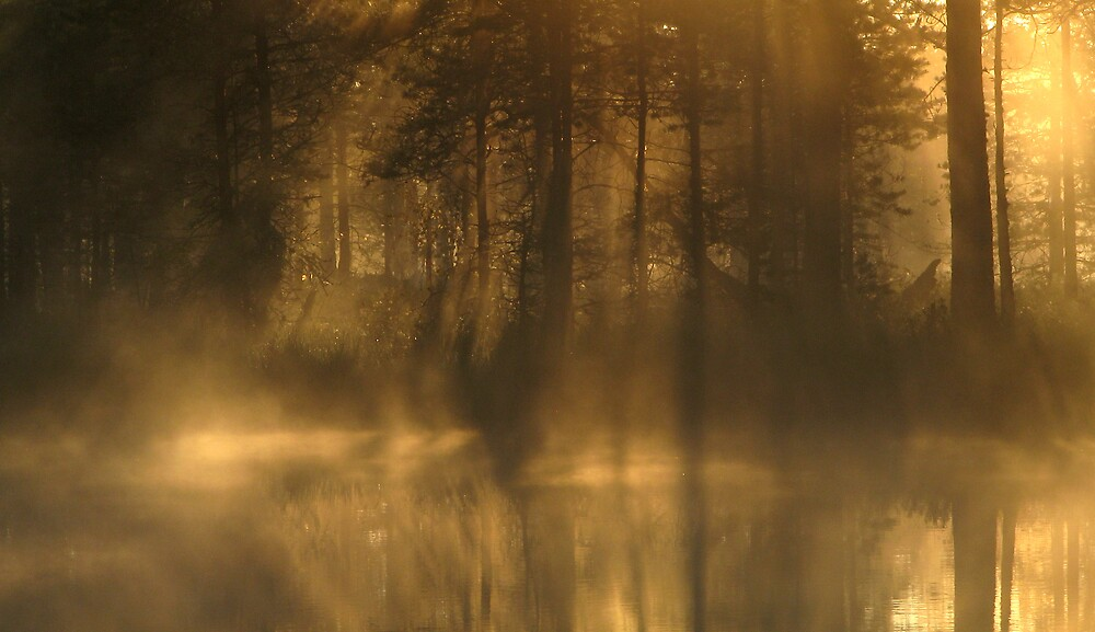 'Forest, water, light' by Petri Volanen