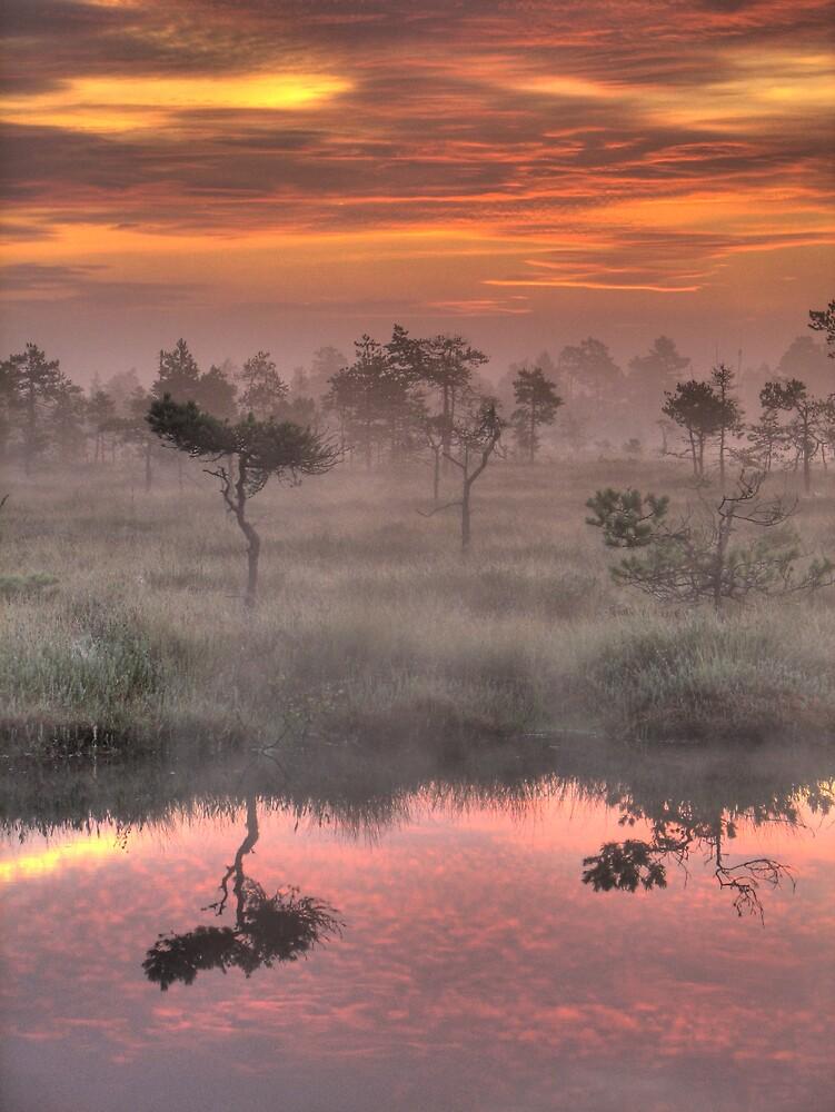 'Dreamland' by Petri Volanen