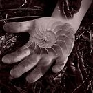 Shell hand by freshalex