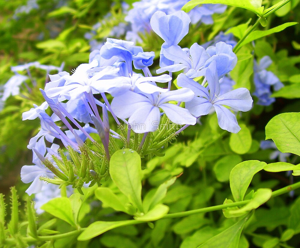 """ My world of blue."" by John  Smith"