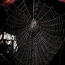 Spiders Web by karenkirkham