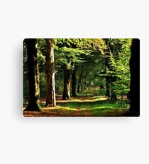 Walking in the October forest Canvas Print