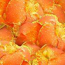 Canna Lilien gelb und orange von Irisangel