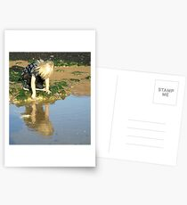 Rock pools Postcards