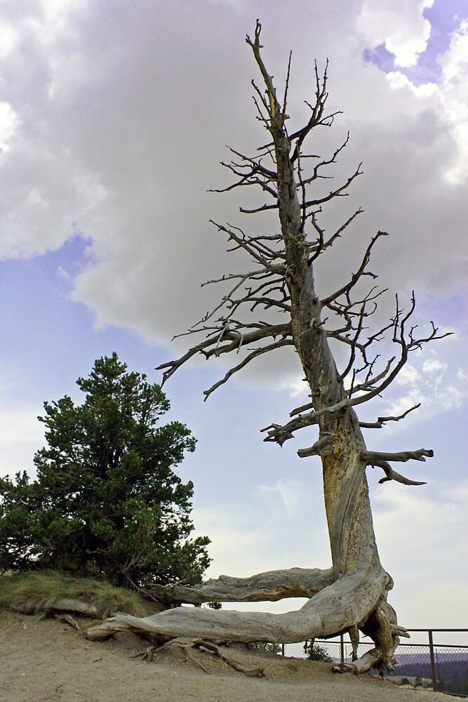 Tree With Arms by Tim craftmyphoto Farrell