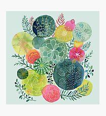 Succulent Circles Photographic Print